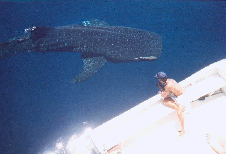 Cruising between Islands, we saw this rare Whale Shark!